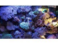 Marine corals for sale £1