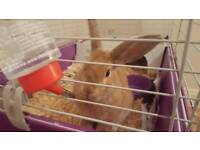 Rabbit and new cage