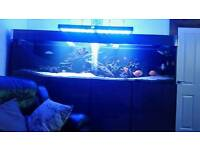 8foot tank for sale