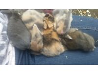 5 beautiful baby bunnies for sale