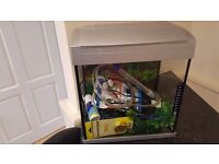 Fish Tank: Selling a Tropical fish tank and all the accessories to look after tropical fish
