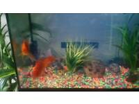 beautiful fish tank with 2 gold fish cleaner pump light size l 62 cm w 31 cm h 43 cm