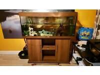 Juwel 240ltr fishtank