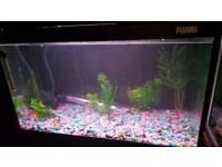 Fish tank aquarium with fish