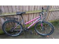 2017 Ladies Falcon Expression mountain bike in Pink and silver