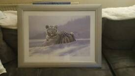 Picture (snow tiger)