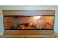 3ft light oak vivarium - full set up