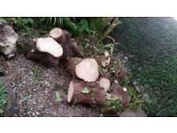 FREE logs for fire/burner