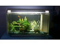 25l home fishtank for sale