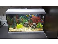 Lovely fish tank and fish