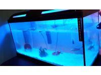 3 Cold Water Fish + Tank