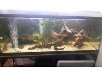 🐟 5ft fish tank full set up 🐟