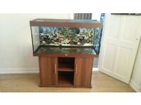 Aquarium 4ft