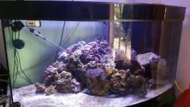 4ft bow front marine tank or tropical
