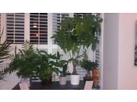 indoor plants selection, plant, pot, flower