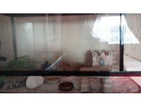small reptile vivarium with heat mat and ornaments