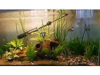3ft fish tank and stand