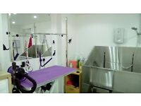 Dog Groomer near Fiveways Brighton. A calm, quiet, salon just for your pet. Bankside Dog Grooming.