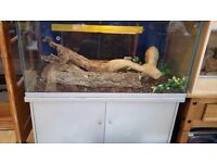 A Beautiful 5 foot Corn Snake for sale with ALL accessories and Vivarium for FREE.