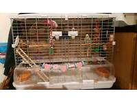 2 male Budgies with cage