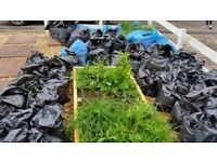 Bagged soil (free)