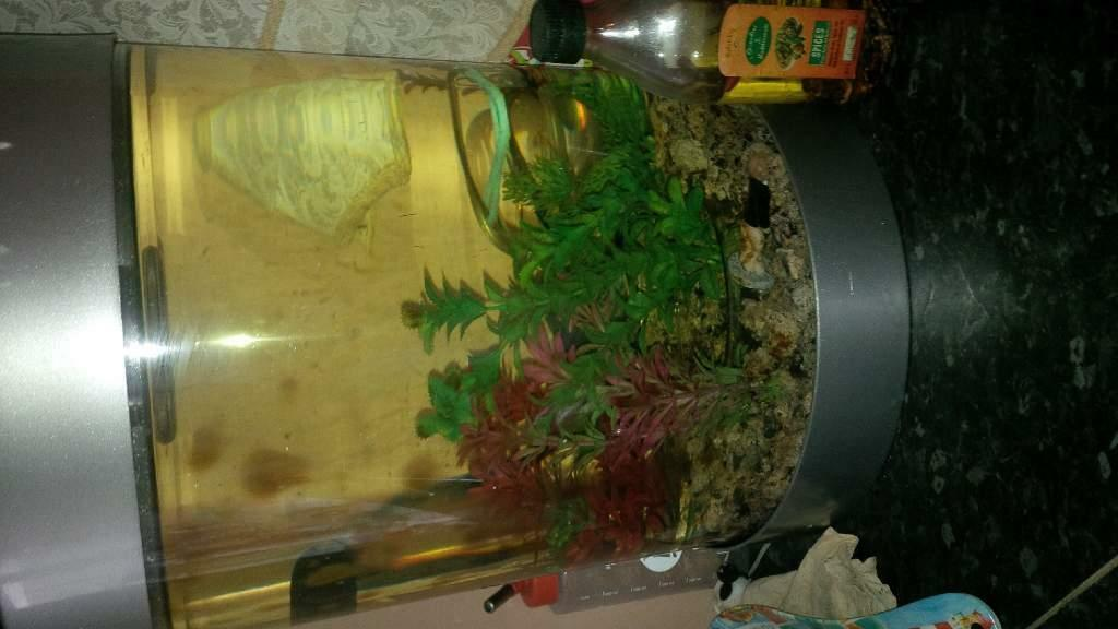 Round Fish Tank For Sale Round Fish Tank And