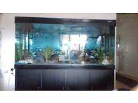 5ft fish tank on moden 3 door cabenet