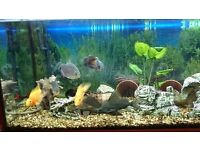 RIO JUWEL 180 LITRE FISH TANK WITH CABINET