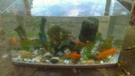 7 fish and fish aquarium