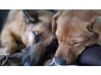 Woofs Wags Walks Pet Services, Lympstone, offers Home Boarding/Dog Walking/Day Care