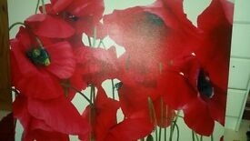 large red white poppy canvas