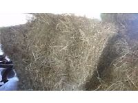 Hay bales, small square July 2017
