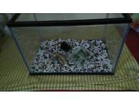 Fish tank with gravel