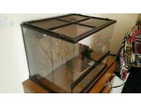Exo Glass Terrarium with a heat lamp and UV light