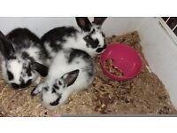 Last 2 baby rabbits