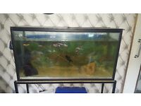 Huge fish tank with fish and stand