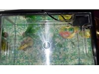 25ltr Fish Tank with fish and accessories