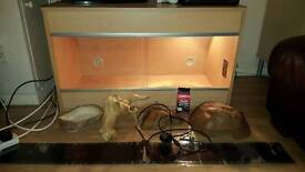 3ft vivarium plus accessories