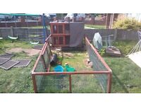 Rabbit hutch plus run and more