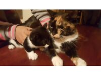 Female cat with one of her kittens... Gives birth to amazing kittens