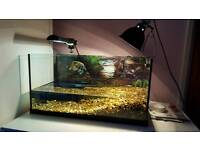 turtle and tank set up