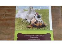Bertie's Dog Kennel's, Day Stay's, Dog Walking Berwick upon Tweed