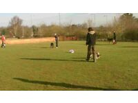 Fun friendly classes in basic obedience, socialsation and agility.