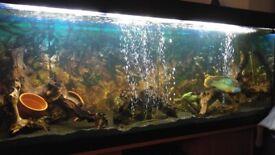 Large Fish Tank -Juwel Rio 400 + Eheim Pro 3 1200XL