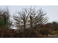 Tree surgeon/hedgecutting services