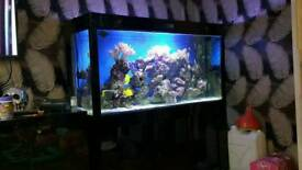 Marine aquarium full set up