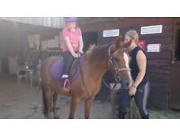 12.3/13hh mare