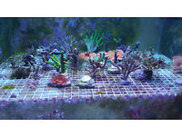 corals left over from sale