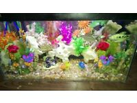 Full tropical set up fish tank for sale
