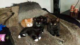 Cute kittens Leyton